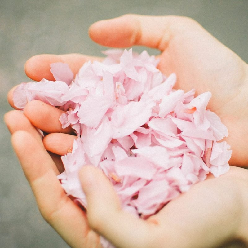 flower petals - Mother's Day Is Never the Same After Baby Loss